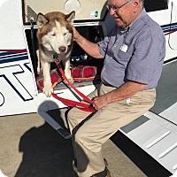 Adopt A Pet :: Logan - Zanesville, OH