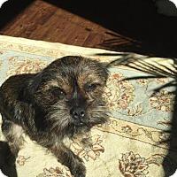Adopt A Pet :: Betty Boop - Spring, TX