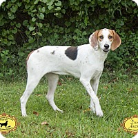 Adopt A Pet :: Tink - Jacksonville, FL