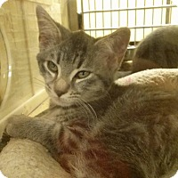 Adopt A Pet :: Rebel - Northfield, OH