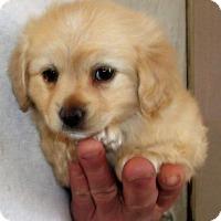 Adopt A Pet :: FLETCHER - Corona, CA