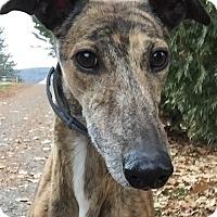 Adopt A Pet :: Kristen - Swanzey, NH