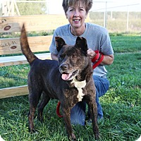 Adopt A Pet :: King - Elyria, OH