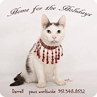 Adopt A Pet :: DARRELL - Corona, CA