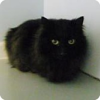 Adopt A Pet :: Ninja - Friendswood, TX