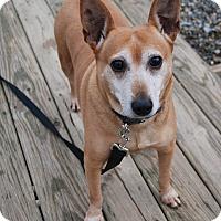 Adopt A Pet :: Cami - Berea, OH