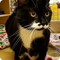 Adopt A Pet :: Oreo - Toledo, OH