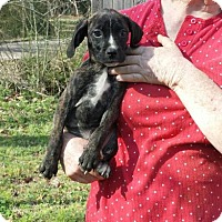 Adopt A Pet :: Laine - Livingston, TX