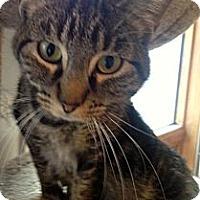 Adopt A Pet :: Pakipsee - Red Deer, AB