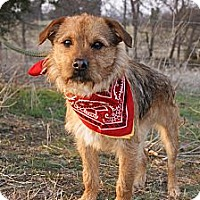 Adopt A Pet :: Benny - Princeton, KY