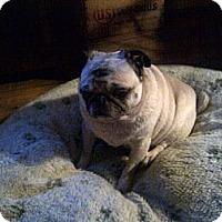 Adopt A Pet :: Lilo - Avondale, PA