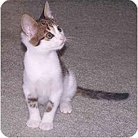 Adopt A Pet :: Big Brother - Richmond, VA