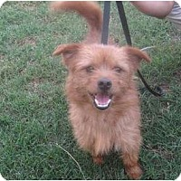 Adopt A Pet :: Taz - Orange Park, FL