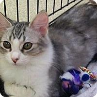 Adopt A Pet :: Lacy - Modesto, CA