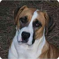 Adopt A Pet :: Meagan - Albany, NY
