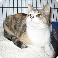 Adopt A Pet :: Rainer - Colmar, PA