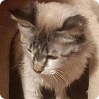 Adopt A Pet :: Cute Flute - Ennis, TX