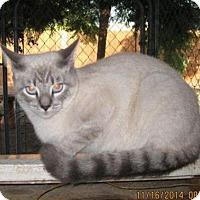 Adopt A Pet :: Leo - La Jolla, CA
