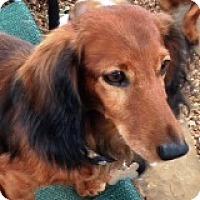 Adopt A Pet :: Lars Langehaare - Houston, TX