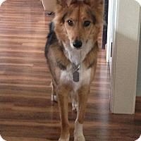 Adopt A Pet :: Juliet - Bardonia, NY