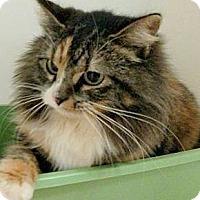 Adopt A Pet :: Kara - Chattanooga, TN
