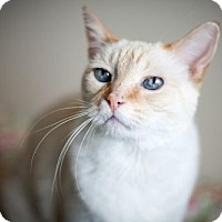 Adopt A Pet :: Pinkie - Boise, ID