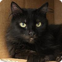 Adopt A Pet :: C-69286 Spooky - Westampton, NJ
