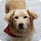 Adopt A Pet :: West