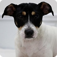 Adopt A Pet :: Scrappy - Picayune, MS