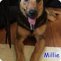 Adopt A Pet :: Millie - Baltimore, MD