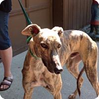 Adopt A Pet :: Varoom - Gerrardstown, WV