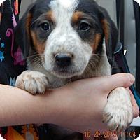Adopt A Pet :: Zorro (5 lb) Video! - Burlington, VT