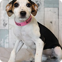 Adopt A Pet :: Alyssa - Waldorf, MD
