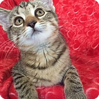 Adopt A Pet :: Morgan - Bloomsburg, PA