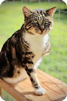 free barn cats