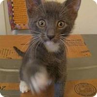 Adopt A Pet :: Bence - Columbia, SC