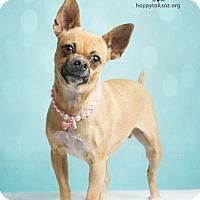 Adopt A Pet :: Gemma - Chandler, AZ