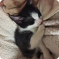 Adopt A Pet :: Rosalie - Spring, TX