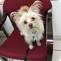 Adopt A Pet :: Jojo - Monrovia, CA