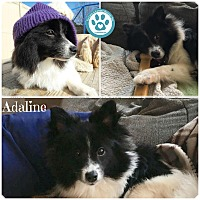 Adopt A Pet :: Adaline - Kimberton, PA