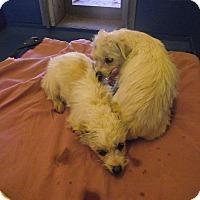 Adopt A Pet :: Chip and Dale - Cedaredge, CO