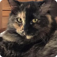 Adopt A Pet :: Patch - Houston, TX