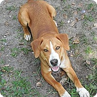 Adopt A Pet :: Charles - Ormond Beach, FL