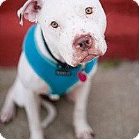 Adopt A Pet :: Frankie - Reisterstown, MD