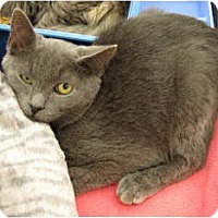 Adopt A Pet :: Shadow - Harrisburg, NC