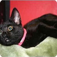 Adopt A Pet :: VENUS - SILVER SPRING, MD