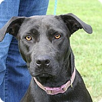 Adopt A Pet :: Ryleigh - West Columbia, SC