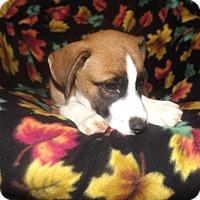 Adopt A Pet :: Cherokee - Mechanicsburg, PA