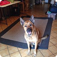 Adopt A Pet :: Bear - Coral Springs, FL