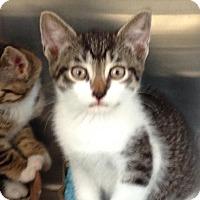 Adopt A Pet :: Benedict - East Brunswick, NJ